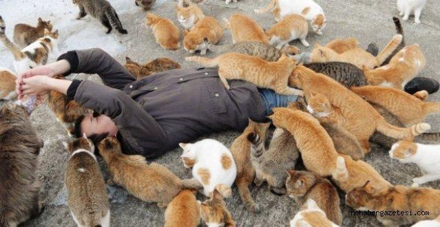 Ada Tam Bir Kedi Cenneti